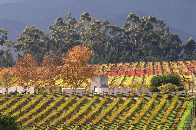 GOLD-Winelands-SA