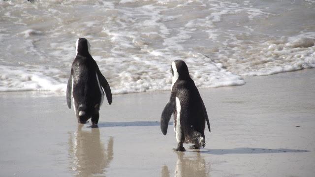 GOLD-Penguin